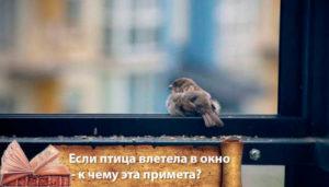 Сонник птицы залетели. к чему снится птицы залетели видеть во сне - сонник дома солнца