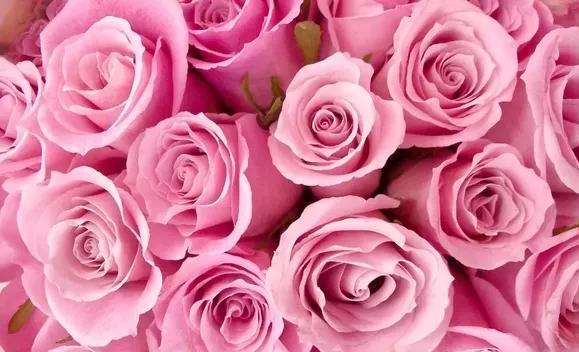 К чему снится красная роза? сонник — красные розы во сне