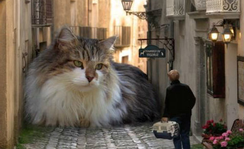 Сонник 2 толстых кота. к чему снится 2 толстых кота видеть во сне - сонник дома солнца