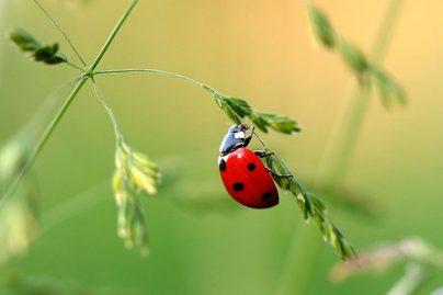 Сонник насекомое  приснилось, к чему снится насекомое во сне видеть?