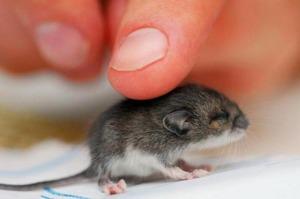 Сонник мышь белая. к чему снится мышь белая видеть во сне - сонник дома солнца