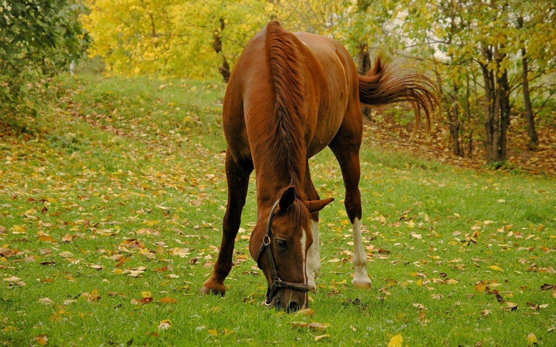 Сонник лошадь дома. к чему снится лошадь дома видеть во сне - сонник дома солнца