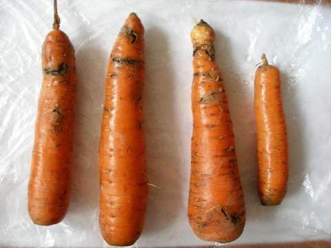 Сонник сажать морковь. к чему снится сажать морковь видеть во сне - сонник дома солнца