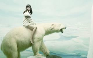 К чему снится  медведь во сне — по 90 сонникам! если видишь во сне медведь что значит?