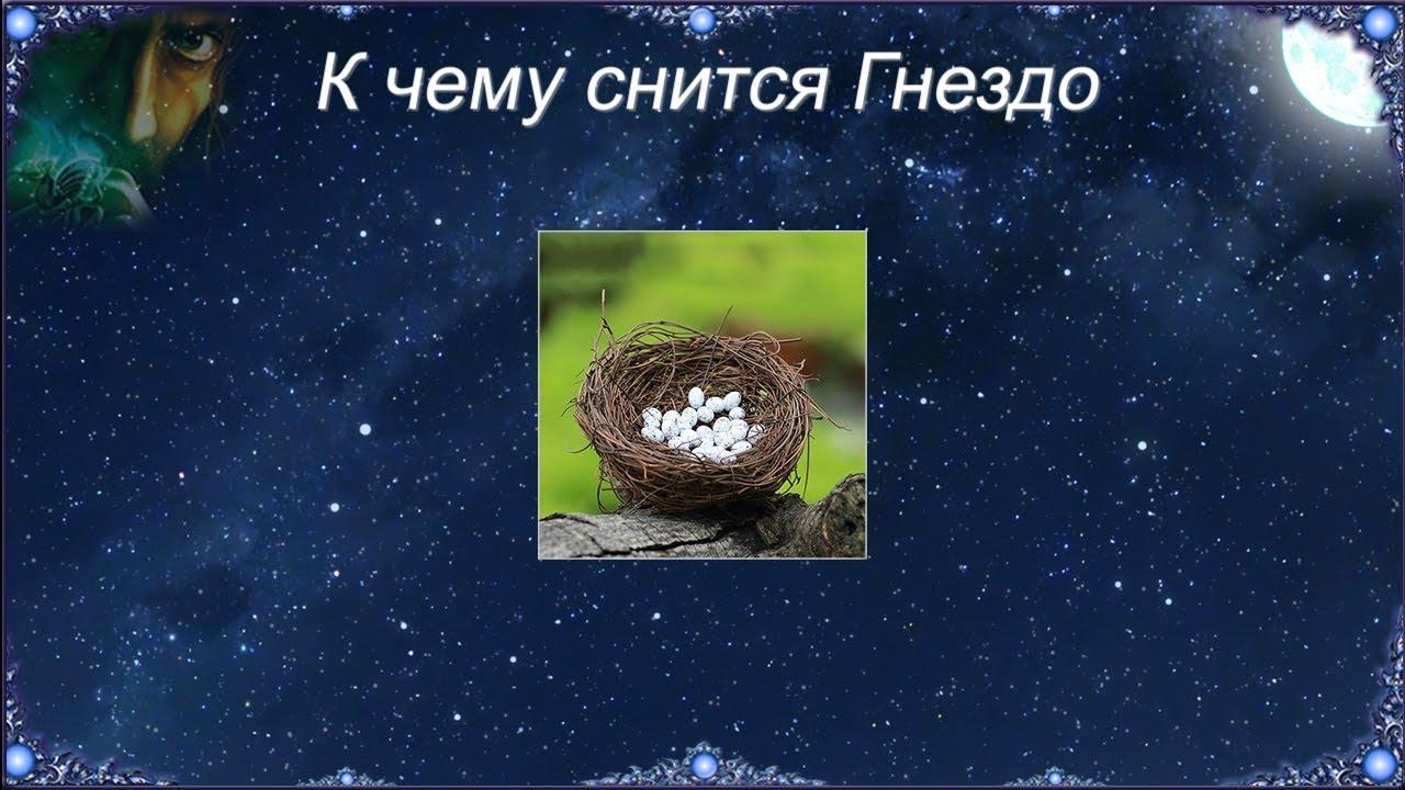 Сонник: если приснилось гнездо