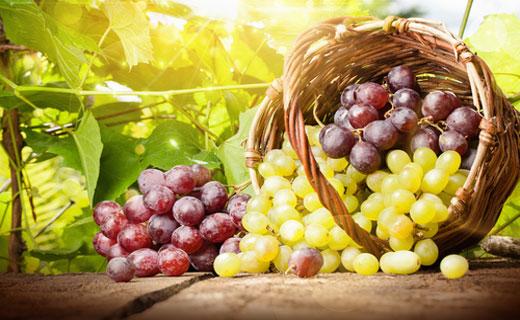 Сонник виноград. к чему снится виноград во сне женщине и мужчине