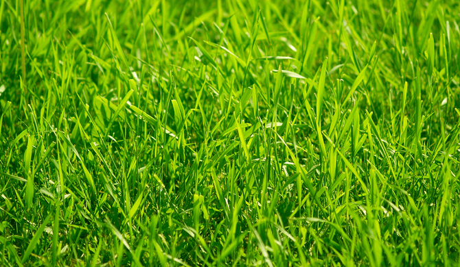 К чему снится трава