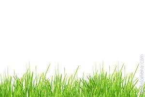 Сонник серпом косить траву. к чему снится серпом косить траву видеть во сне - сонник дома солнца