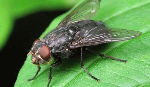 Сонник жуки личинки. к чему снится жуки личинки видеть во сне - сонник дома солнца
