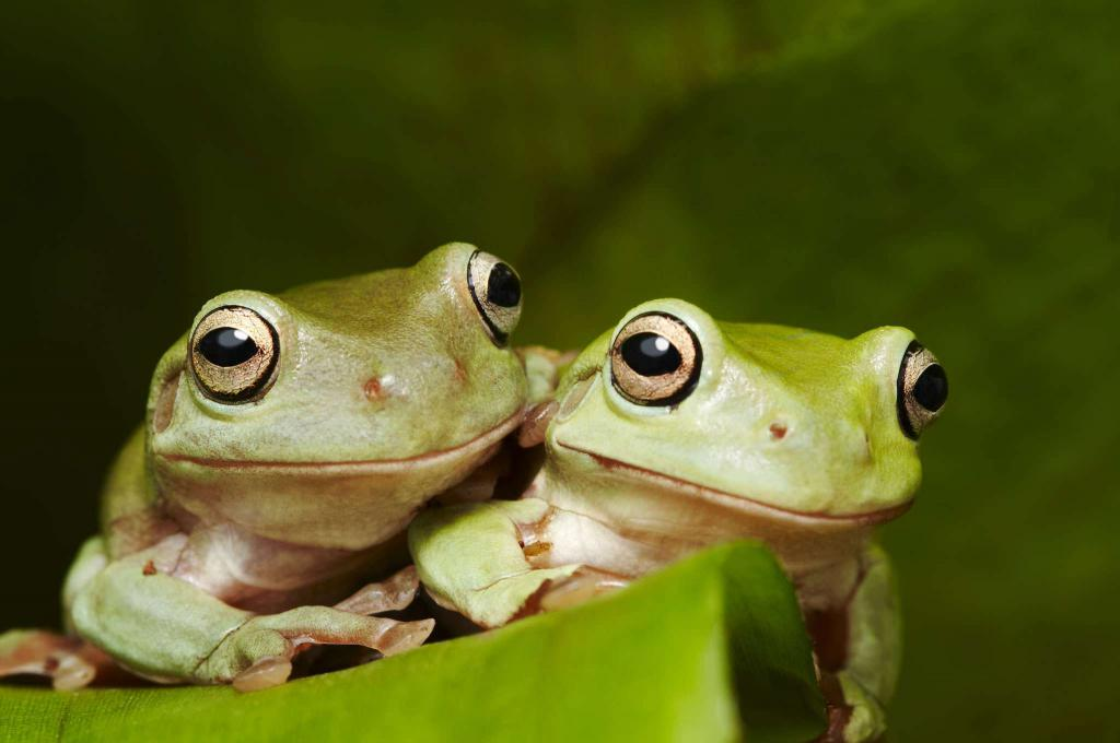 «лягушка к чему снится во сне? если видишь во сне лягушка, что значит?»