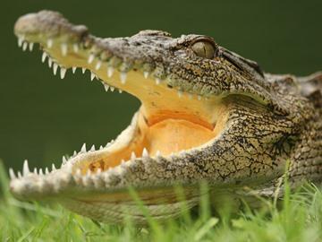 Видеть рептилию в воде