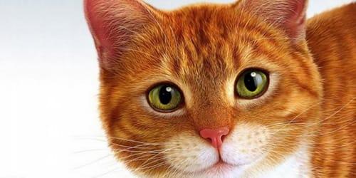 Сонник жирный кот. к чему снится жирный кот видеть во сне - сонник дома солнца