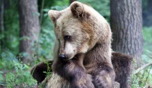 Что предвещают сновидения с медведем – трактовка разных снов по нескольким сонникам