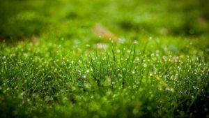 Сонник косить траву. к чему снится косить траву видеть во сне - сонник дома солнца