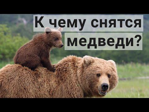 Приснился медведь — толкование снов по соннику