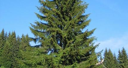 Сонник лес елки. к чему снится лес елки видеть во сне - сонник дома солнца