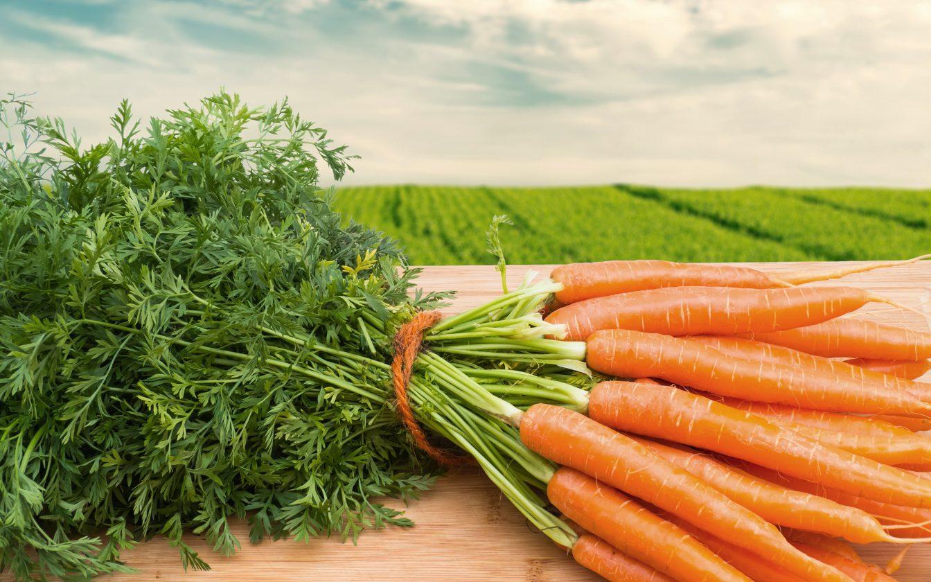 Сонник выкапывать морковь приснилась, к чему снится выкапывать морковь во сне видеть?