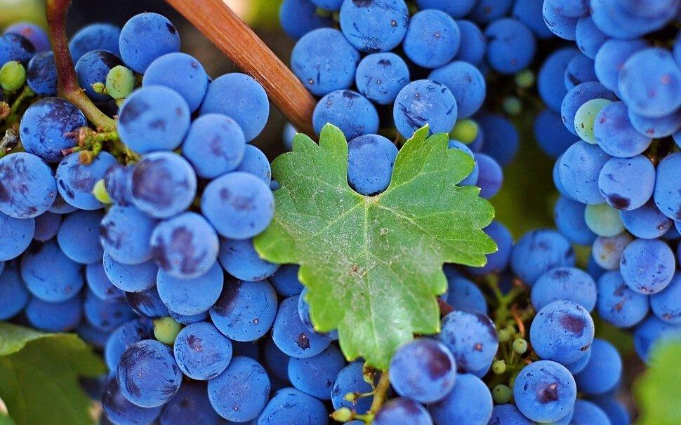 Сонник давать виноград. к чему снится давать виноград видеть во сне - сонник дома солнца