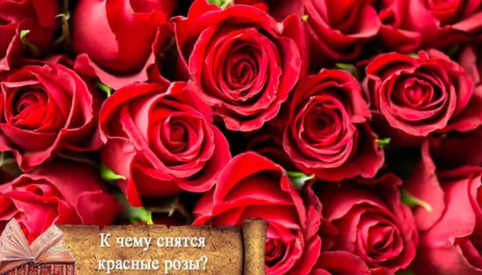 «роза к чему снится во сне? если видишь во сне роза, что значит?»