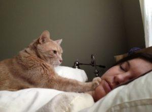 Кот мешает спать