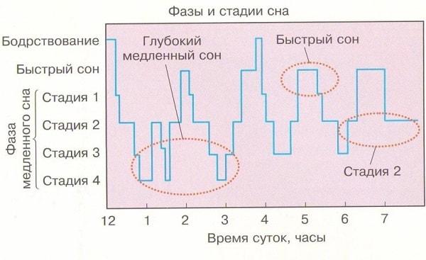 Фазы и стадии