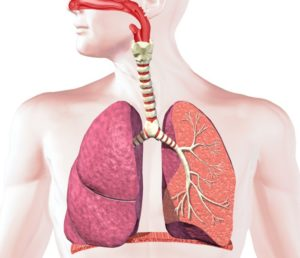 Улучшение работы дыхательной системы