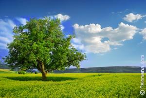 Сонник косить сухую траву. к чему снится косить сухую траву видеть во сне - сонник дома солнца