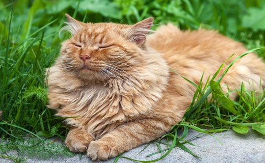 Сонник трехцветный жирный кот. к чему снится трехцветный жирный кот видеть во сне - сонник дома солнца