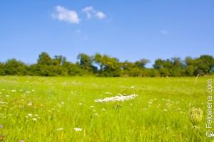 Сонник: к чему снится зеленая трава. значение и толкование сновидения