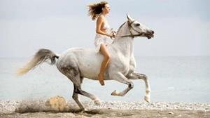 Сонник несколько лошадей. к чему снится несколько лошадей видеть во сне - сонник дома солнца