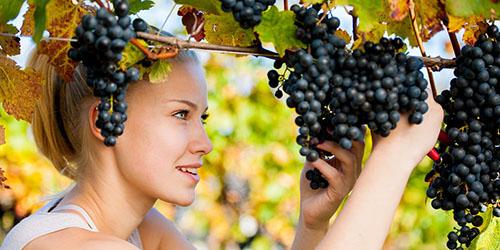 Сонник брать виноград. к чему снится брать виноград видеть во сне - сонник дома солнца