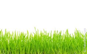 Сонник косить свежую траву. к чему снится косить свежую траву видеть во сне - сонник дома солнца