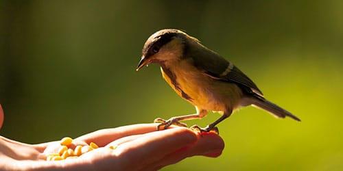 Сонник серая птица залетевшая в дом. к чему снится серая птица залетевшая в дом видеть во сне - сонник дома солнца