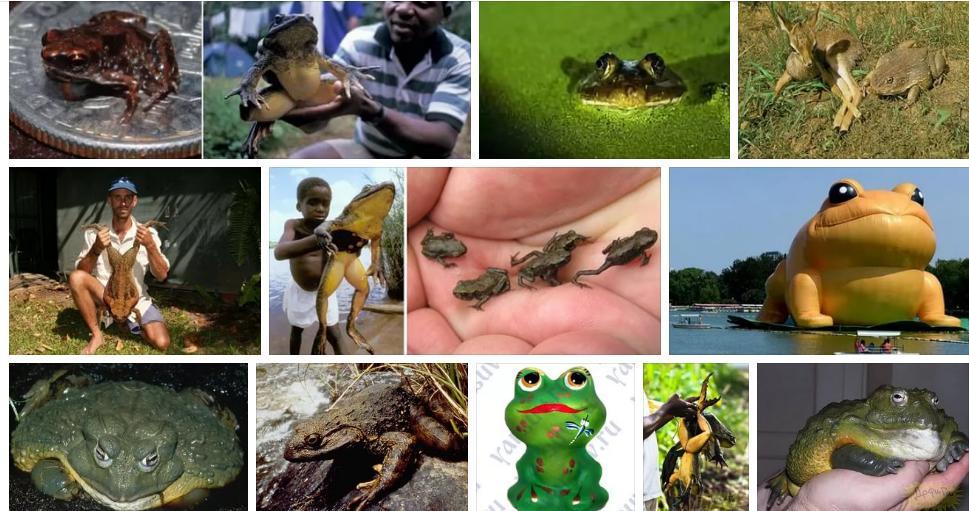 «сонник лягушка приснилась, к чему снится во сне лягушка»