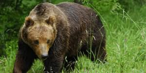 К чему снится медвежонок?