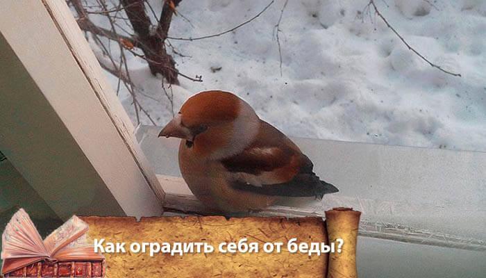 Птица залетевшая в дом