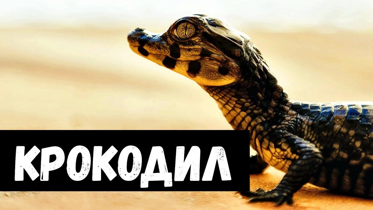 К чему снятся крокодилы