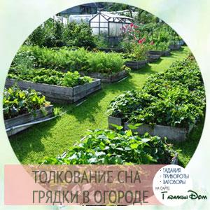 Сонник сажать помидоры на грядку. к чему снится сажать помидоры на грядку видеть во сне - сонник дома солнца