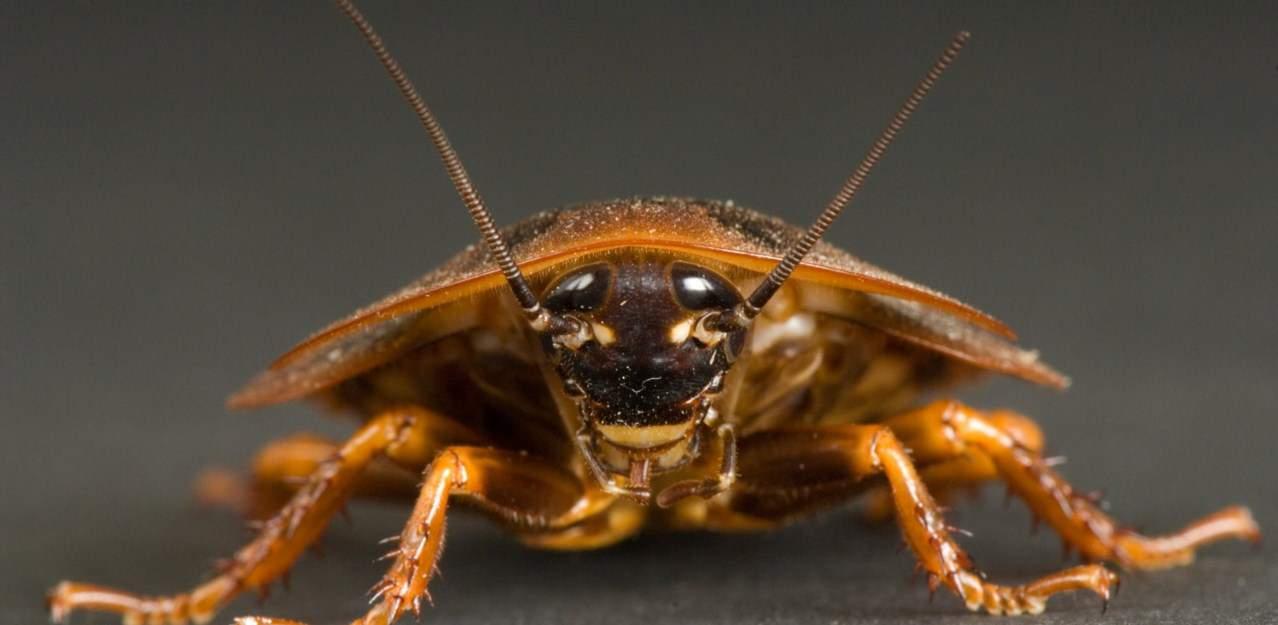 Сонник кузнечик насекомые. к чему снится кузнечик насекомые видеть во сне - сонник дома солнца. страница 2