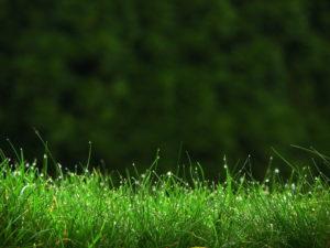 Косить зелёную траву