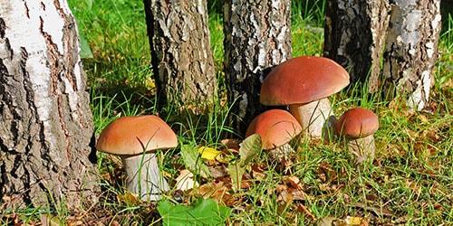 Сонник грибы в корзине опята. к чему снится грибы в корзине опята видеть во сне - сонник дома солнца