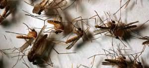 Давить руками насекомых