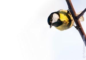 Сонник сонник птица залетевшая в. к чему снится сонник птица залетевшая в видеть во сне - сонник дома солнца
