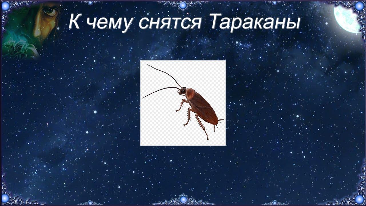 Давить личинки насекомых