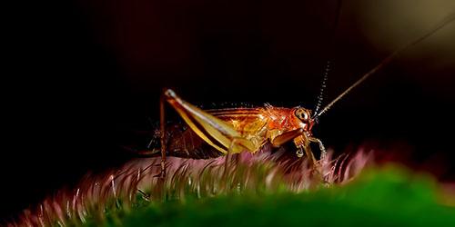 Сонник убивать кусающих насекомых. к чему снится убивать кусающих насекомых видеть во сне - сонник дома солнца