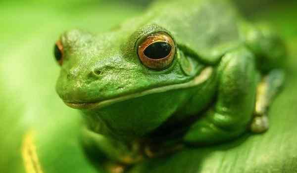 Сонник лягушка, к чему снится лягушка, во сне лягушка