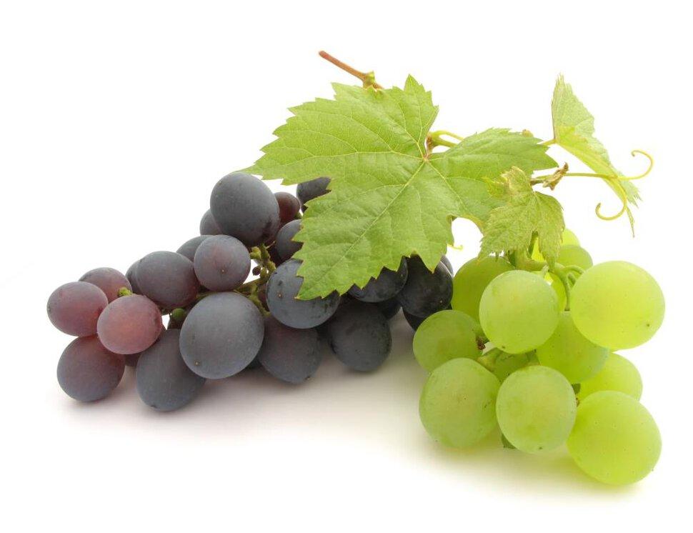 Сонник к чему снится во сне виноград. к чему снится к чему снится во сне виноград видеть во сне - сонник дома солнца