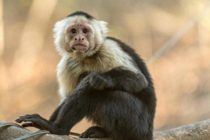 Сонник укус обезьяны. к чему снится укус обезьяны видеть во сне - сонник дома солнца