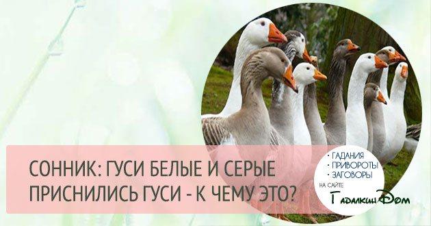 Сонник гуси и утки белые. к чему снится гуси и утки белые видеть во сне - сонник дома солнца