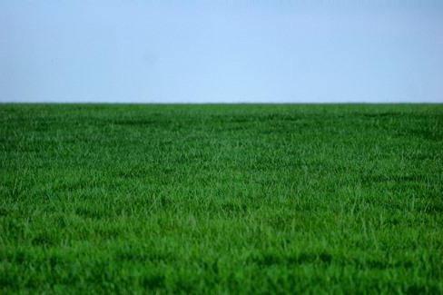 К чему снится трава: зеленая, высокая, скошенная
